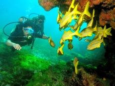 Mergulhando em Abrolhos - BA